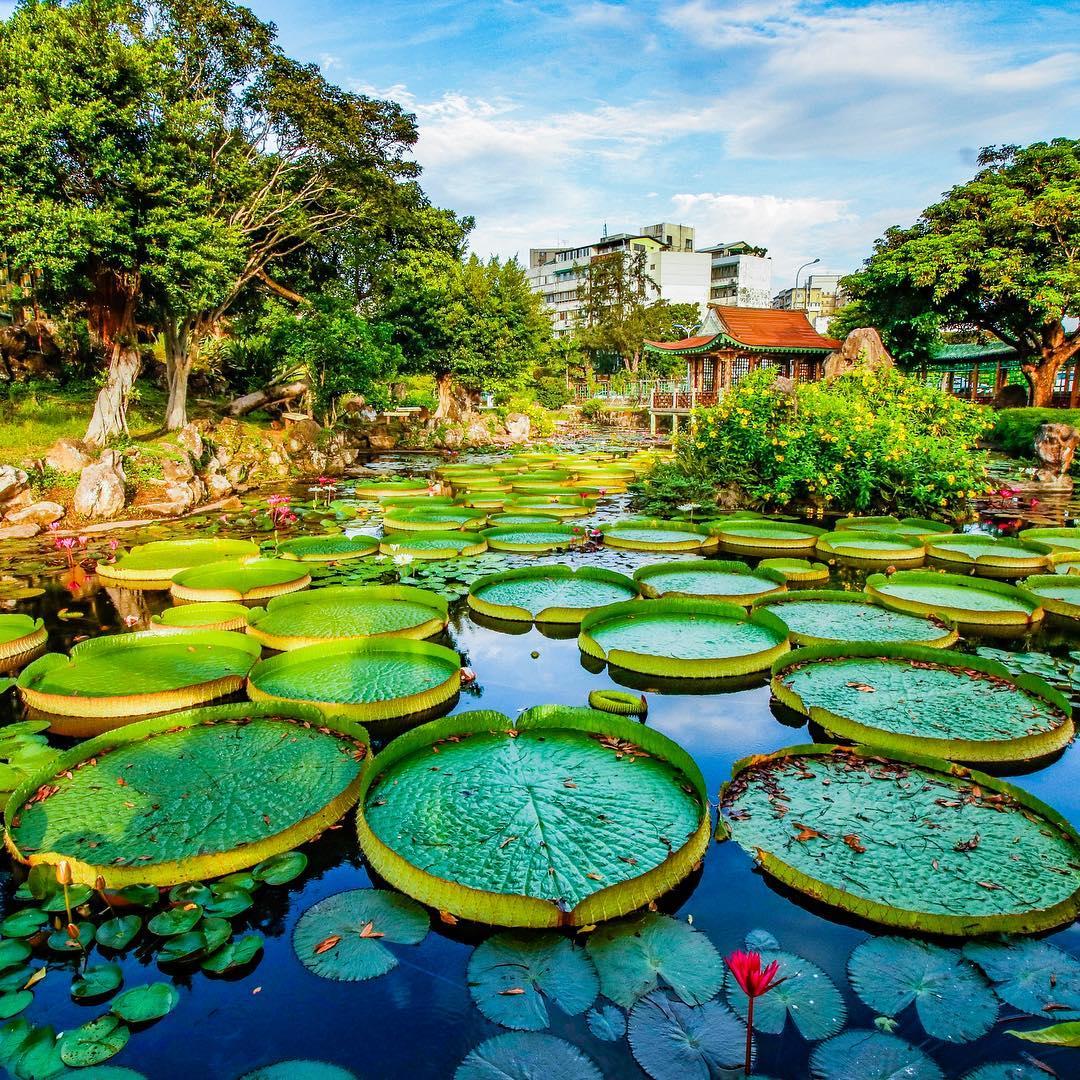 Du lịch Đài Loan - Ao sen